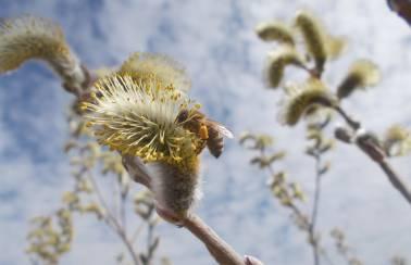 holcim und die bienen dotternhausen