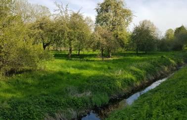 pm tag der biodiversitaet streuobstwiese laegerdorf
