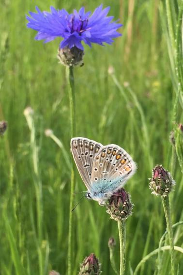 BILD PM Schmetterlinge 29