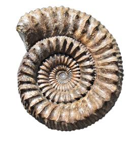 veranstaltungen fossile schaetze aus dem steinlachtal 01